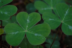 3 Fun Facts About Saint Patrick Day